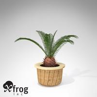 xfrogplants sago palm plant max