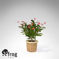 3d model xfrogplants crown-of-thorns plant