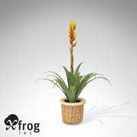 3dsmax xfrogplants gemma guzmania plant