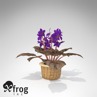 3d lwo xfrogplants african violet plant