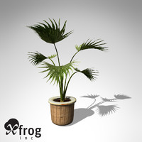 3d model xfrogplants miniature chusan palm