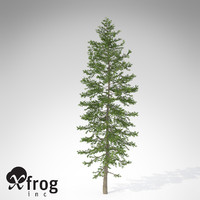 max xfrogplants nikko fir tree