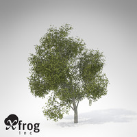 3d xfrogplants japanese maple tree