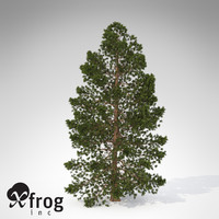 max xfrogplants hinoki falsecypress tree