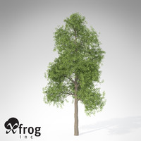 xfrogplants ginkgo tree 3d model