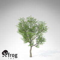 xfrogplants japanese walnut tree c4d