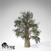 temple juniper tree 3d model