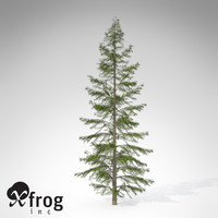 3d xfrogplants northern japanese hemlock model