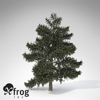 3d xfrogplants atlas cedar tree model
