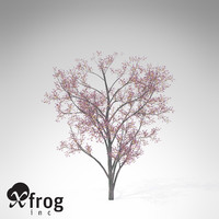 xfrogplants judas tree 3d max