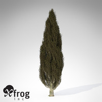 italian cypress tree 3d model
