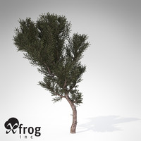 3d model xfrogplants prickly juniper tree