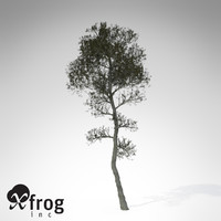 aleppo pine tree 3d model