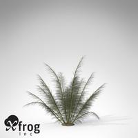3d xfrogplants onychiopsis fern plant model
