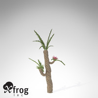 XfrogPlants Williamsonia