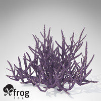 XfrogPlants Low Acropora