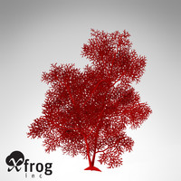 XfrogPlants Giant Sea Fan