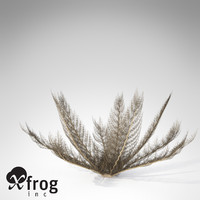 3d model xfrogplants naked basket star