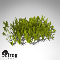 feather caulerpa sertularoides alga 3d model