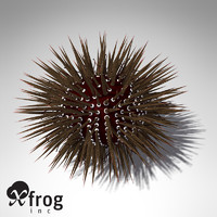 3d model xfrogplants mathaeus sea urchin
