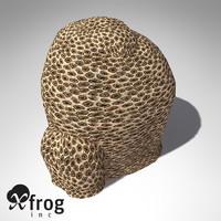 XfrogPlants Honeycomb Coral