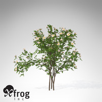 XfrogPlants Dog Rose