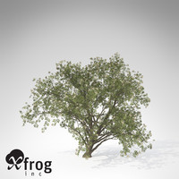 XfrogPlants Elderberry