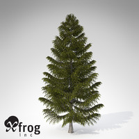 xfrogplants brewer spruce tree c4d