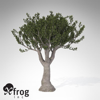 xfrogplants bristlecone pine tree 3d 3ds