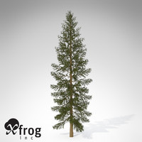 3d model xfrogplants douglas fir tree