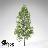 3d xfrogplants black alder tree model