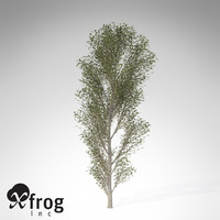 XfrogPlants Black Poplar