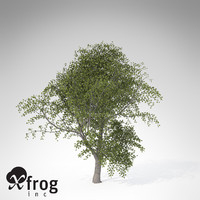 xfrogplants durmast oak tree 3d model
