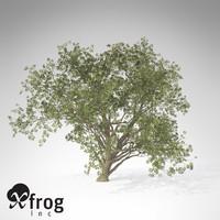 XfrogPlants Elderberry