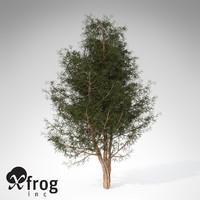 3d model xfrogplants english yew tree