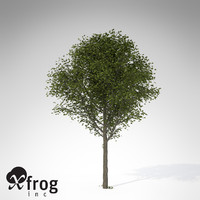 xfrogplants broad-leaved linden tree 3d model