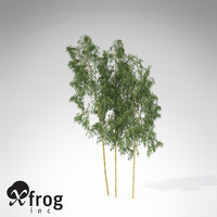 hachiku bamboo plant 3d model