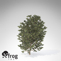 xfrogplants myrtle tree shrub 3d 3ds