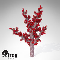 XfrogPlants Carnation Coral