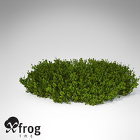 XfrogPlants Halimeda