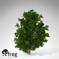 xfrogplants hornbeam tree plant 3d model