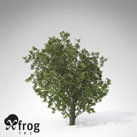 xfrogplants grey willow plant 3d model