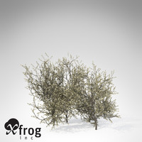 3ds max xfrogplants blackthorn