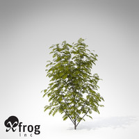 3d max xfrogplants european mountain ash