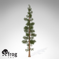 XfrogPlants Subalpine Fir