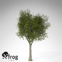 3d model of xfrogplants little walnut tree