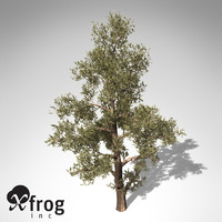 3d model of xfrogplants western juniper tree