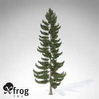 xfrogplants engelmann spruce tree 3ds