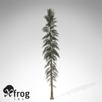 XfrogPlants White Spruce