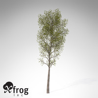 3d model xfrogplants balsam poplar tree